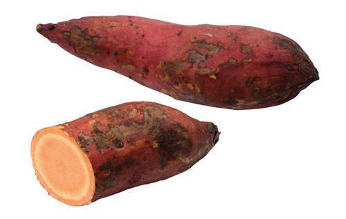 紅薯發芽後還能食用嗎。會不會像土豆一樣有毒 - 每日頭條