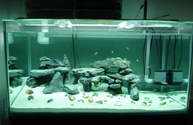 魚缸怎麼造景 造景魚缸教程 - 每日頭條