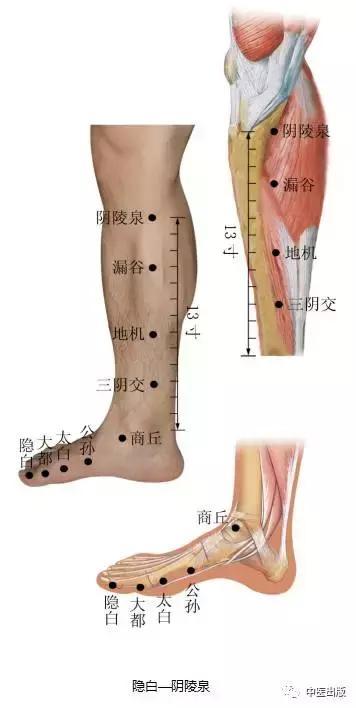 經絡穴位:足太陰脾經經穴(部分) - 每日頭條