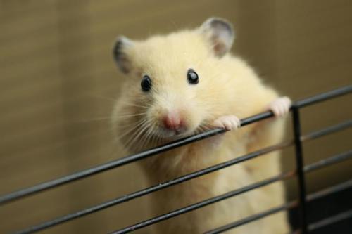 我們都叫倉鼠,但是我們有不同 - 每日頭條