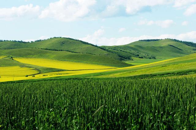 最美草原——呼倫貝爾;海拉爾市;內蒙北及東北行1 - 每日頭條