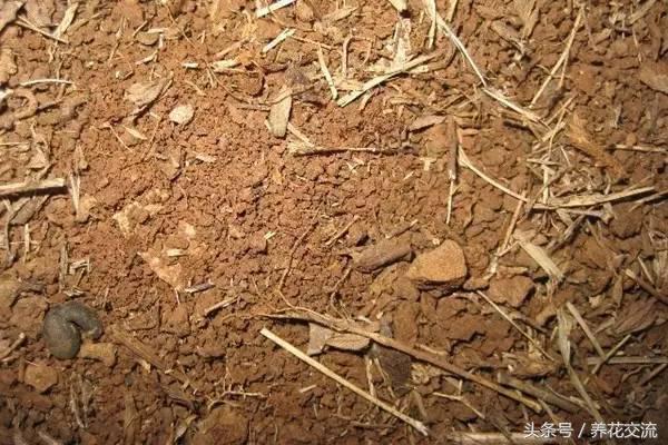 kitchen compost container wall shelf 到市场买营养土 不如自己用落叶堆肥 用来养花是很好的 每日头条 养花并不一定要买土壤 自己有条件也可以配土 当然懂得一些简单的常识 有时候我们在市场上买的土壤并不一定就很适合养花 学会自己配土 效果并不会比买的土壤差