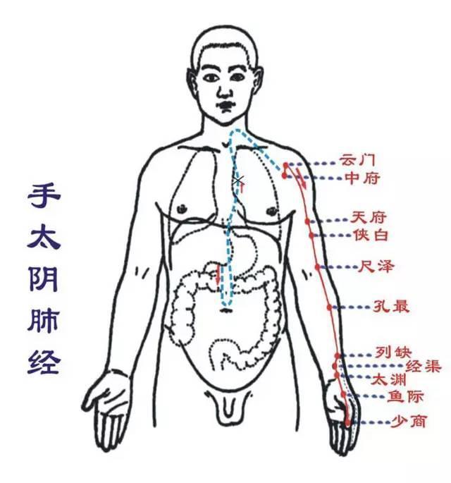 針道至簡:十二經脈解讀系列之手太陰肺經 - 每日頭條