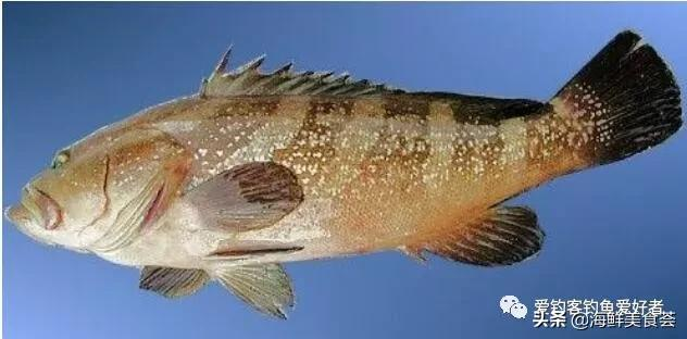 南方菜市場上常見的廉價海魚。各地叫法不一樣。你們那裡都叫啥? - 每日頭條