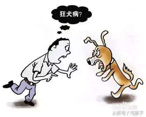 狂犬病到底多可怕?養寵物的你必須看看 - 每日頭條