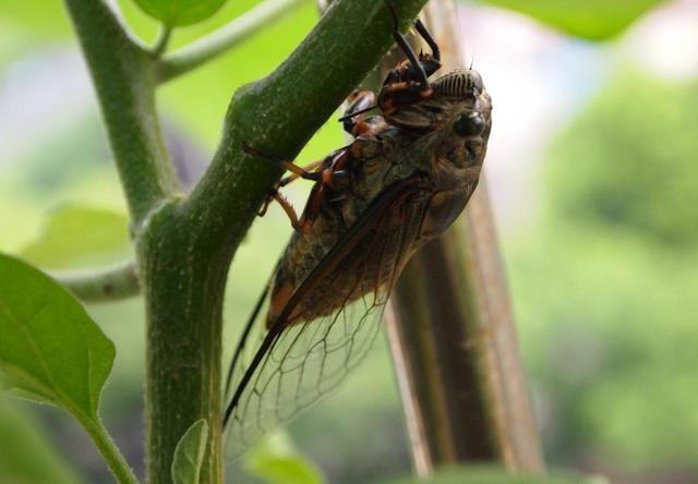 昆蟲圖集:夏天的禪如何變成知了 - 每日頭條