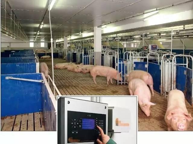 夫妻2人養一萬頭豬!荷蘭農場怎麼做到的? - 每日頭條