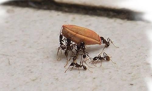 螞蟻暴力驅逐同伴!小生物有大智慧 - 每日頭條