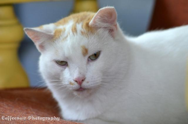 來吸一波貓吧。一群貓界中的肥宅 - 每日頭條