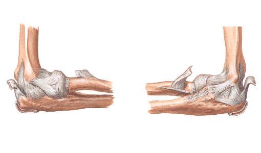 正常人體解剖學 認識自己人體六大關節之肘關節 - 每日頭條