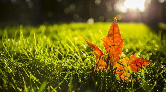 這五首寫秋天的詩歌,一反歷代文人悲秋傳統,唱出大美秋天的讚歌 - 每日頭條