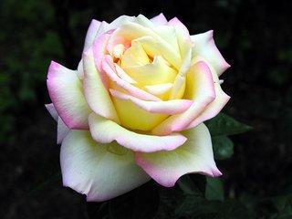 贈人玫瑰手有餘香 - 每日頭條