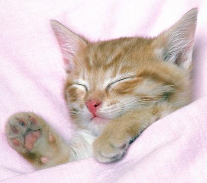 貓抓沙發怎麼辦 了解貓咪抓沙發的原因 - 每日頭條
