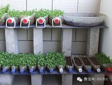 陽臺種菜自製水培蔬菜系統 - 每日頭條