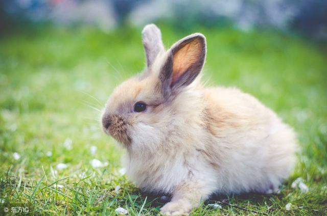 寶寶很喜歡小兔子。家裡養兔子好不好。該怎麼養寵物兔子? - 每日頭條