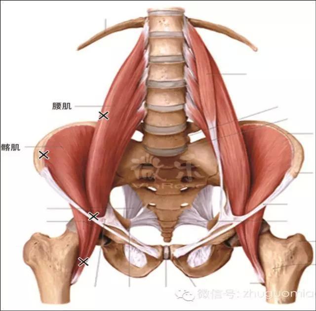 康復臨床中處理肩關節活動受限思路 - 每日頭條