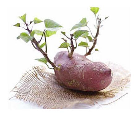 土豆、洋蔥、紅薯、蘿蔔、花生……發芽的食物還能吃嗎? - 每日頭條