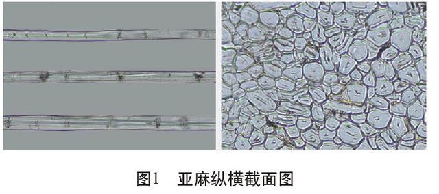 乾貨收藏!各類麻纖維在不同顯微鏡下的特徵分析 - 每日頭條