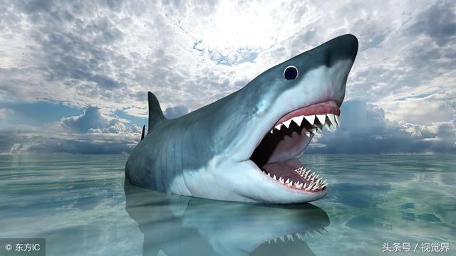 史前巨齒鯊牙齒化石被發現:長15厘米可吞食鯨魚 - 每日頭條
