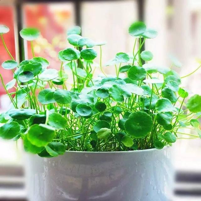 家裡養這些植物,隨便擺一盆都能聚財! - 每日頭條