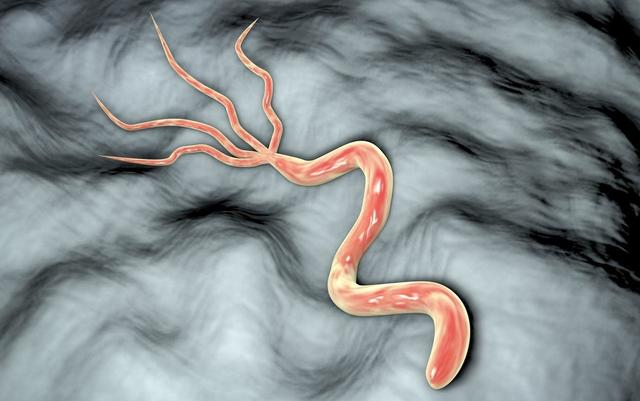 幽門螺桿菌:阿莫西林與3種藥物聯合殺菌。20元一盒效果怎麼樣? - 每日頭條
