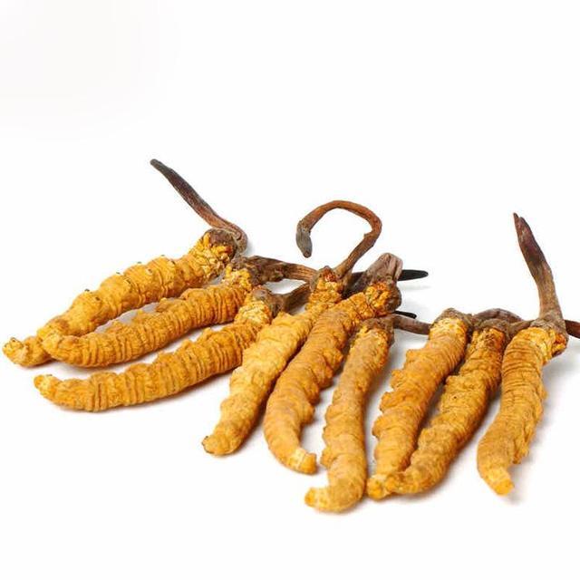 冬蟲夏草一天吃幾根最靠譜?蟲草規格跟身體決定你的吃法 - 每日頭條