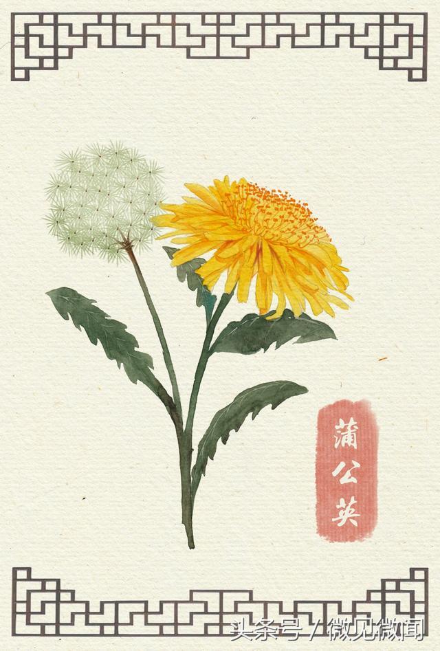 一組淡雅別致的手繪花卉,以及婉約絕妙的詩詞 - 每日頭條