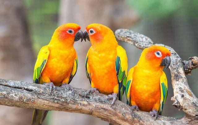 鸚鵡不能吃什麼?盤點會導致鸚鵡中毒的食物 - 每日頭條