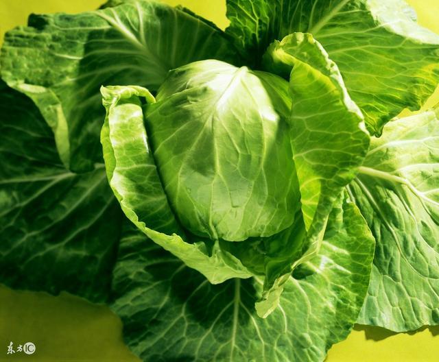 冬季蔬菜管理:蔬菜心葉發黃的原因?該怎麼辦? - 每日頭條