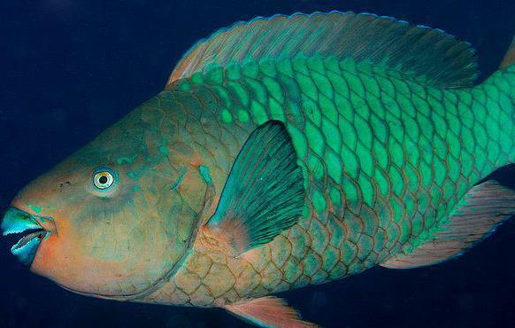 心に強く訴える嘴 魚 - すべての花の畫像