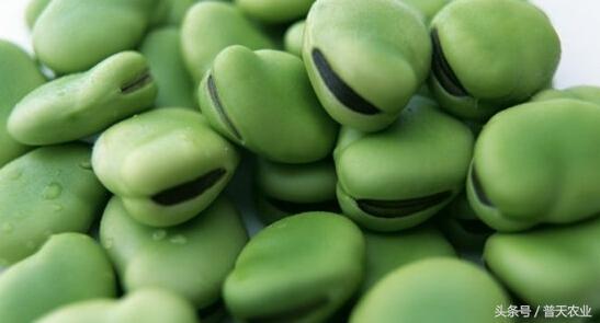 豌豆、黃豆和蠶豆有什麼不同?豌豆、黃豆和蠶豆的區別 - 每日頭條