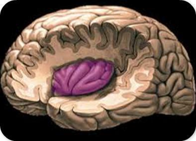 癲癇名醫解析癲癇治療之不同部位病灶手術 - 每日頭條