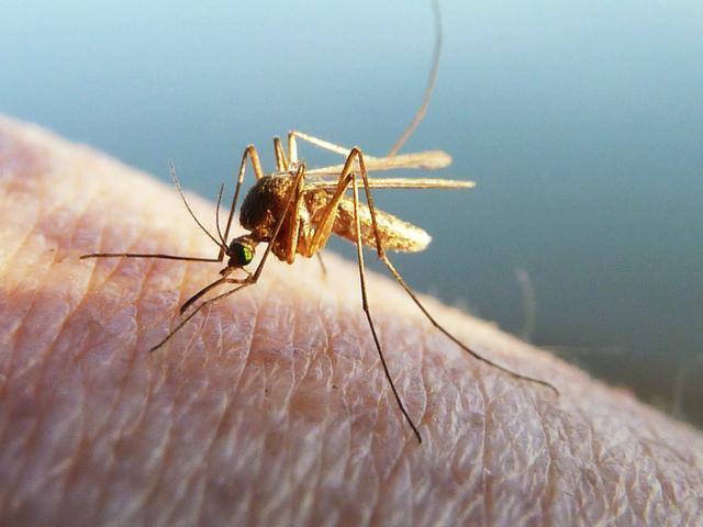 蚊子咬到的地方都是血管周圍?教你一招快速驅蚊 - 每日頭條