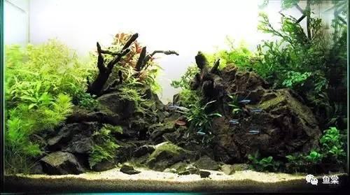 水草老司機 養草缸怎麼換水、施肥、重種? - 每日頭條