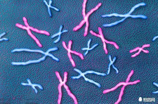 試管嬰兒染色體檢查,能治不孕能辨男女 - 每日頭條
