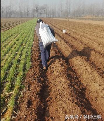 2017年農民回鄉創業種植這個。一畝收入上萬元。年入幾十萬 - 每日頭條