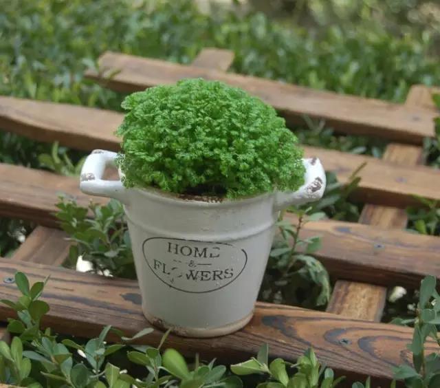 養眼。小小苔蘚也可以這麼美 - 每日頭條