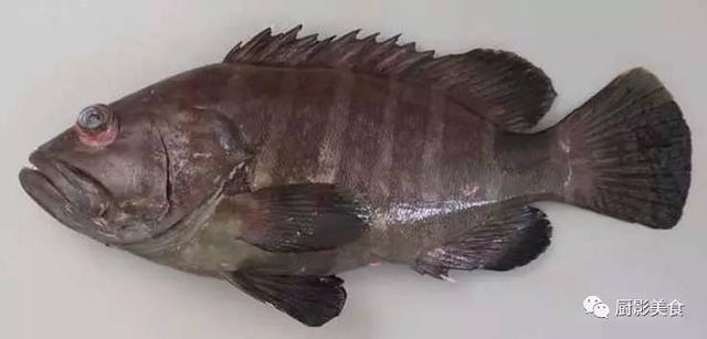 全世界的石斑魚都全了 - 每日頭條
