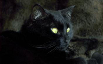 「貓有九條命」的說法是怎麼來的呢? - 每日頭條