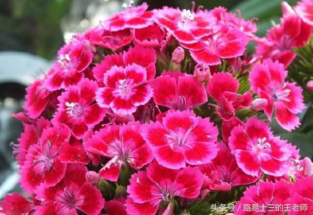 沒有養過花或想養花的你。想了解下那些花適合放在哪裡嗎? - 每日頭條