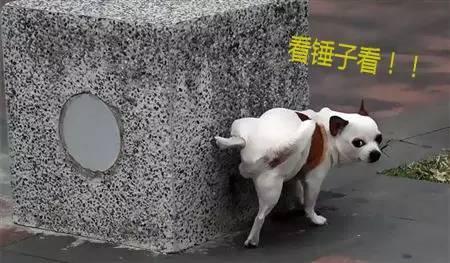 想不想知道你家狗憋尿最久能憋幾個小時? - 每日頭條