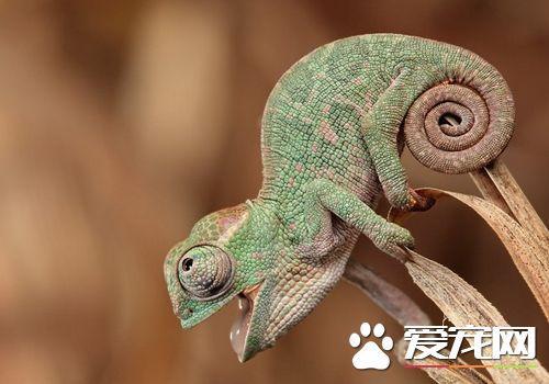 蜥蜴的天敵是什麼 哺乳動物全都獵食蜥蜴 - 每日頭條