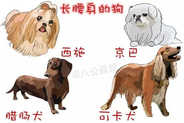 狗狗總弓背、高抬腿、不讓主人摸。很可能是腰部出了問題! - 每日頭條