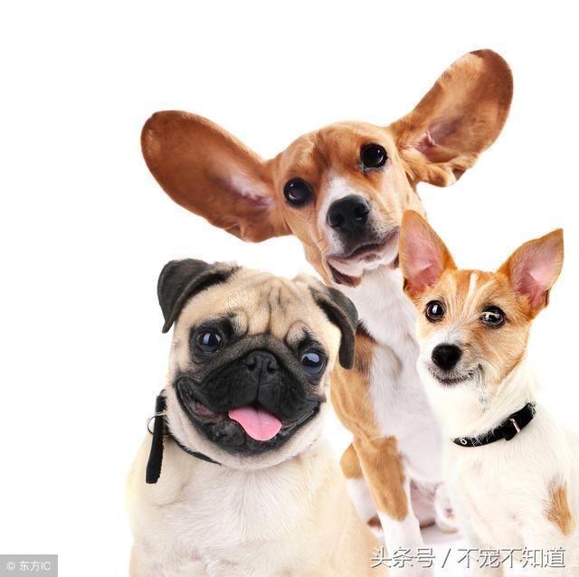 狗狗尿血怎麼辦,是什麼原因引起? - 每日頭條