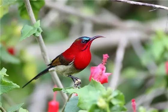 最罕見的鳥。太美了!看看有認識的嗎? - 每日頭條