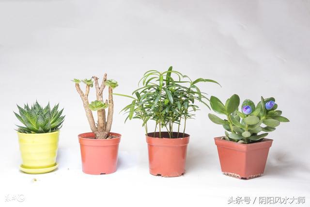 風水大師給你支支招,居家植物怎麼擺放好? - 每日頭條