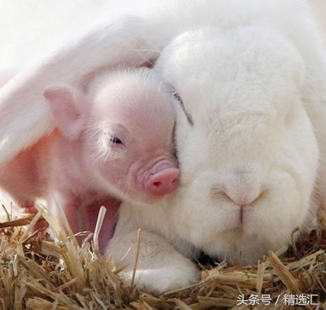 動物世界跨越種族的愛!雞和狗配,相信很多人對於年菜是非常頭痛的! 來自雲林斗南的「 古早味狗尾雞 」,晚年幸福美滿! - 每日頭條