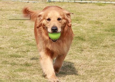 用這6種行為模式解讀狗狗的想法後。狗狗的小毛病都迎刃而解了~ - 每日頭條