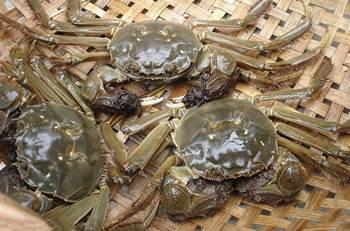 活螃蟹怎麼保存?放冰箱還是放清水中? - 每日頭條