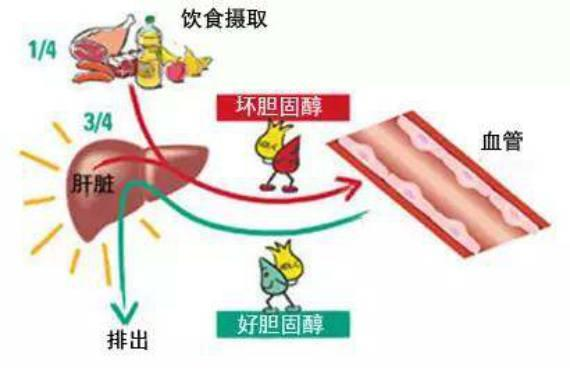 膽固醇偏高怎麼回事?日常做到這幾點,不吃藥也能降低膽固醇 - 每日頭條